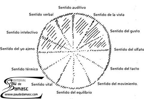 Los doce sentidos del ser humano según Rudolf Steiner. Sentido auditivo, vista, gusto, olfato, tacto, movimiento, equilibrio, vital, térmico, del yo ajeno, intelectivo y verbal